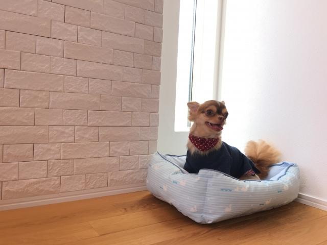 ペットのための床滑り対策7選