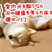 犬の健康を考えた床材